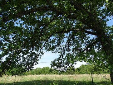 14.50ac Old Wilderness Road Reeds Spring, MO 65737 - Image 1