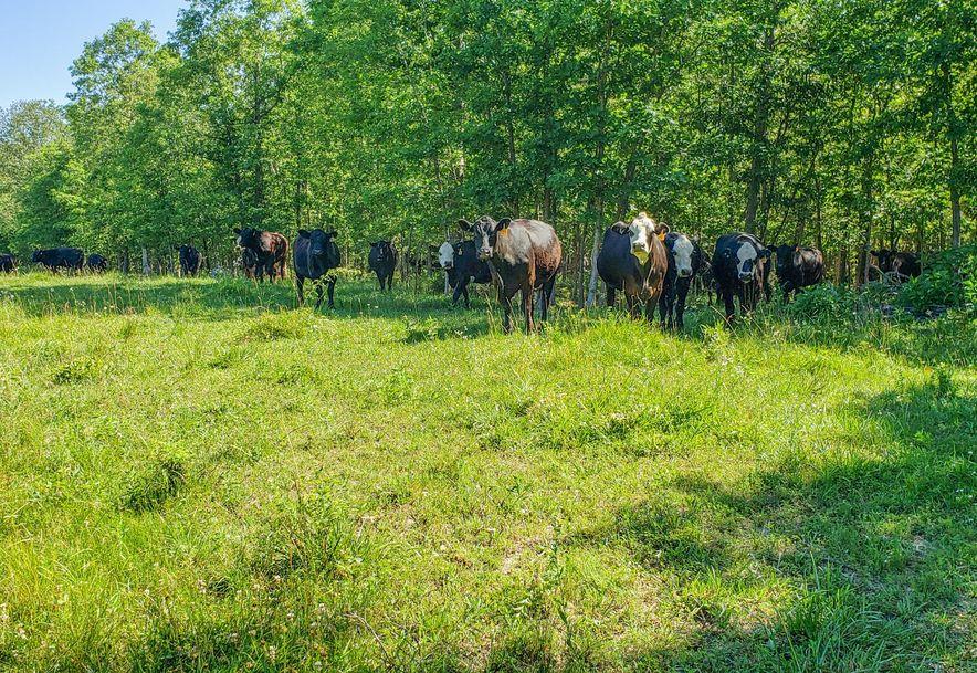 53 Durington Road Buffalo, MO 65622 - Photo 41