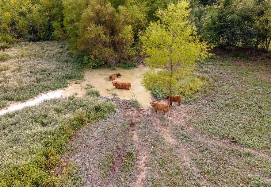 105 Alexas Xing Reeds Spring, MO 65737 - Photo 9