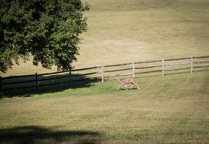 5121 East Farm Rd 170 Rogersville, MO 65742 - Photo 45