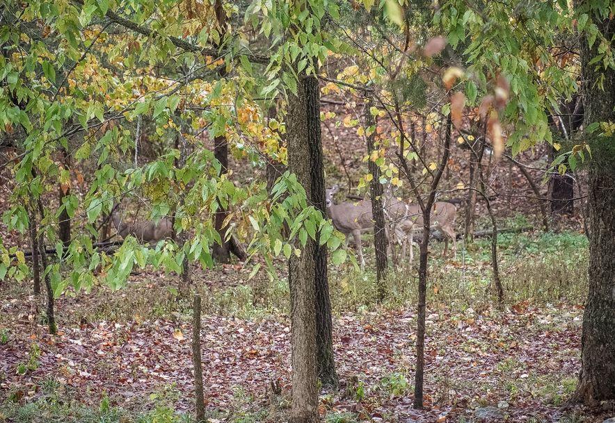205 Whispery Lane Ozark, MO 65721 - Photo 84