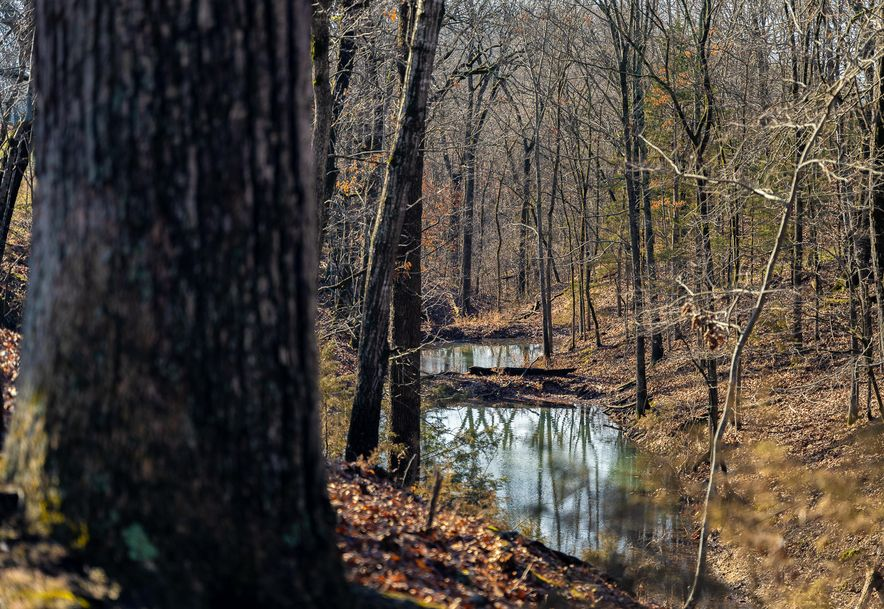 1012 Dogwood Tree Road Reeds Spring, MO 65737 - Photo 11