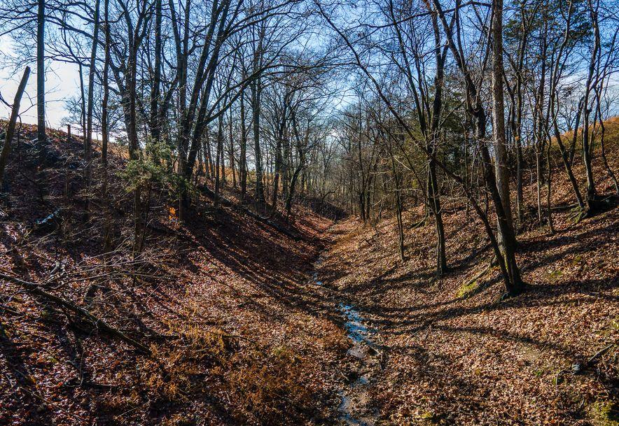 1012 Dogwood Tree Road Reeds Spring, MO 65737 - Photo 14