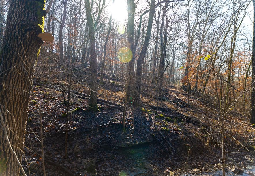 1012 Dogwood Tree Road Reeds Spring, MO 65737 - Photo 19