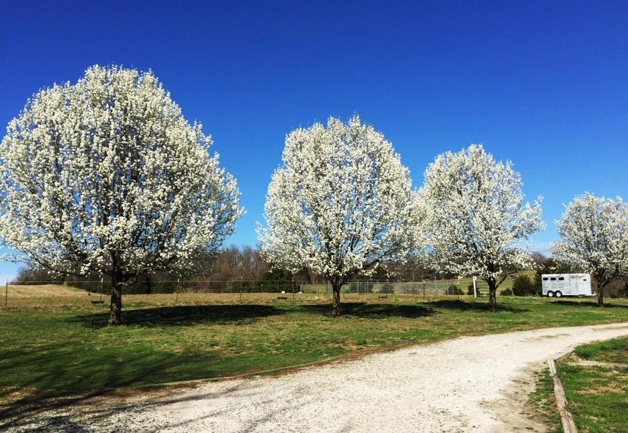 8420 North Farm Road 117 Willard, MO 65781 - Photo 56