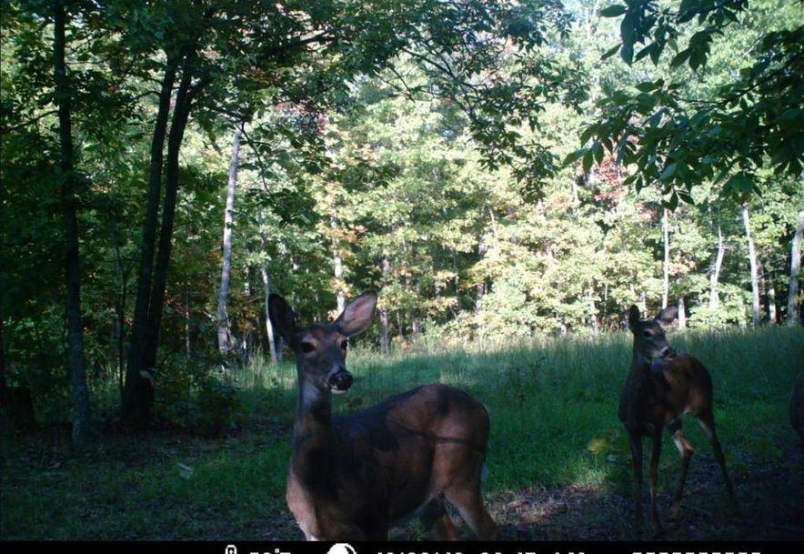 0 Finley Falls Road Seymour, MO 65746 - Photo 41