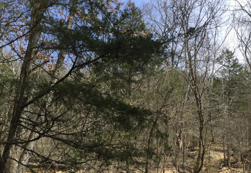 532 Gravely Holler Road Road Forsyth, MO 65653 - Photo 6
