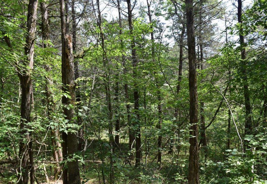 27 Ac Farm Road 2253 Eagle Rock, MO 65641 - Photo 4