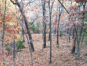 Tbd County Road 636 Lot 16 Theodosia, MO 65761 - Image 1