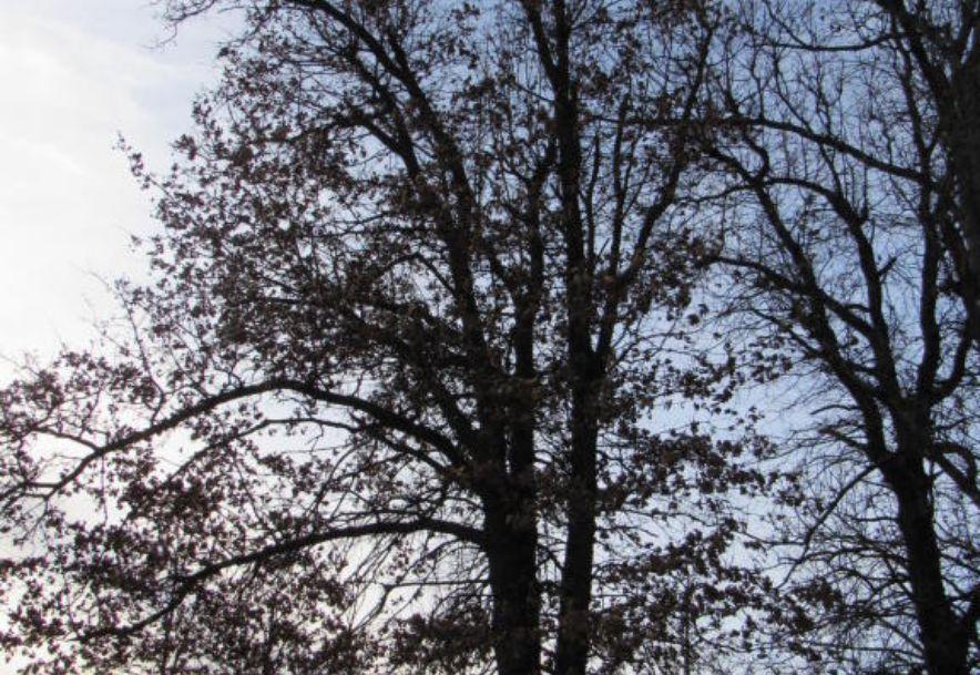 15276 State Hwy K Aurora, MO 65605 - Photo 83