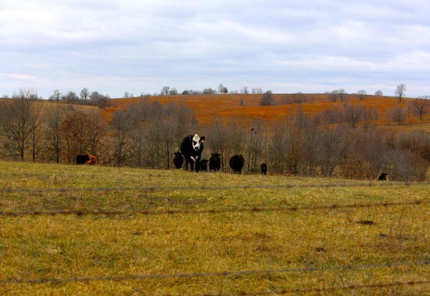 None None County Road 359 None None Thayer, MO 65791 - Photo 103